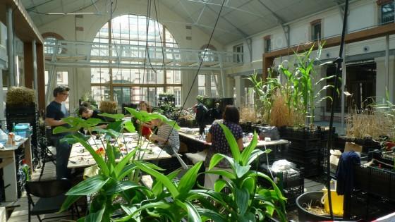 ateliers les insectes artificiel au 104